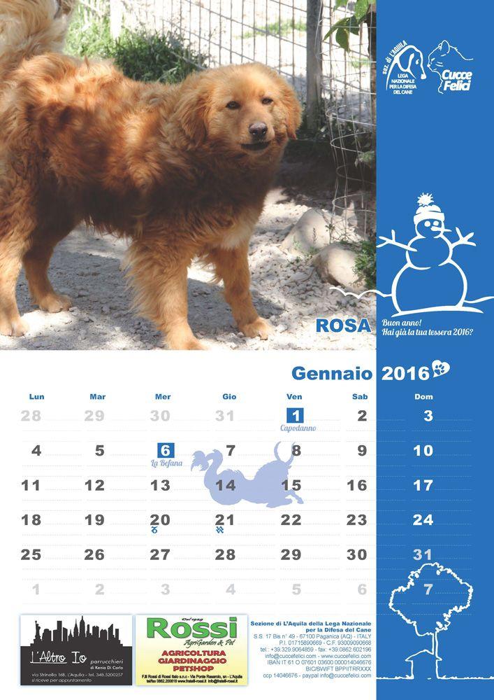 #gennaio - E' ancora possibile richiedere il #Calendario2016 della #LegadelCane di #LAquila a sostegno del #Rifugio per #cani abbandonati e dei #randagi sul territorio. Vuoi sapere come? ► http://cuccefelici.it/calendario-2016-cani-laquila.html