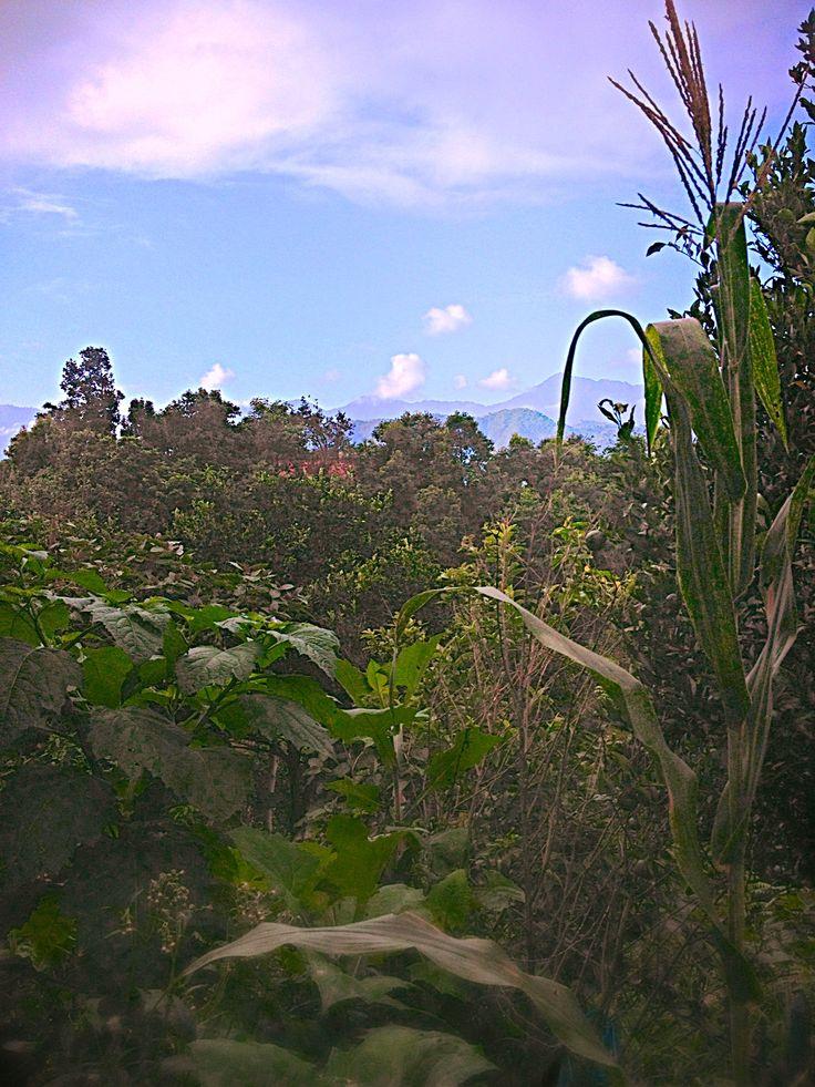 #beautiful #sky #greenary #hill #plants #awesome #photography