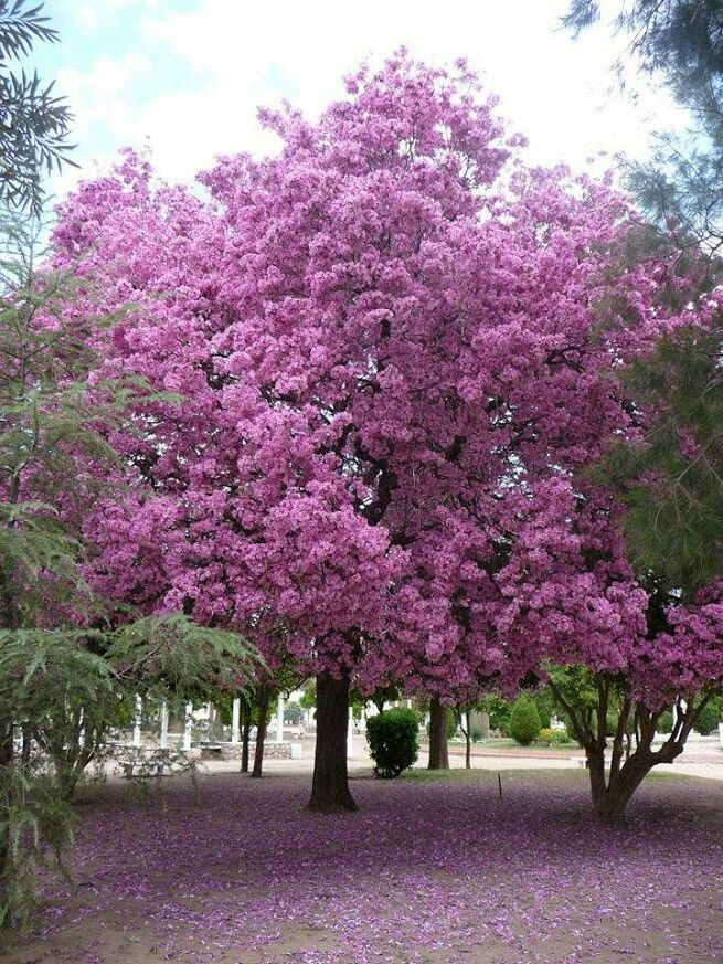 170 besten pink trees bilder auf pinterest rosa b ume. Black Bedroom Furniture Sets. Home Design Ideas