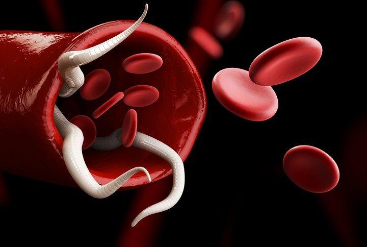 Que vous soyez du groupe A, B, AB ou encore O, vous ne devriez pas manger la même chose : c'est la règle de base du régime groupe sanguin.