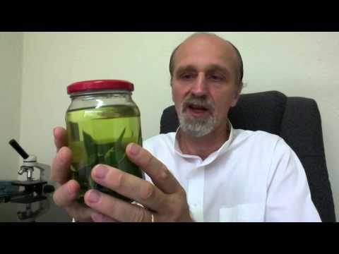 NO TIREN LAS HOJAS DE LA PIÑA  - NOT THROW LEAVES PINEAPPLE - YouTube