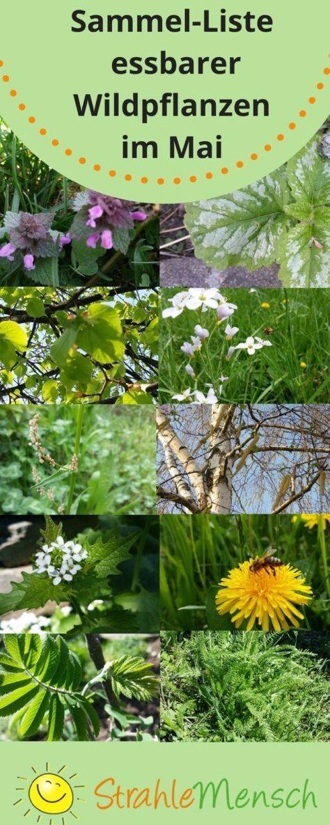 Sammel Liste Essbare Wildpflanzen Mai Garten Und Pflanzen