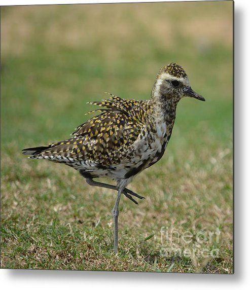 nunavut bird name