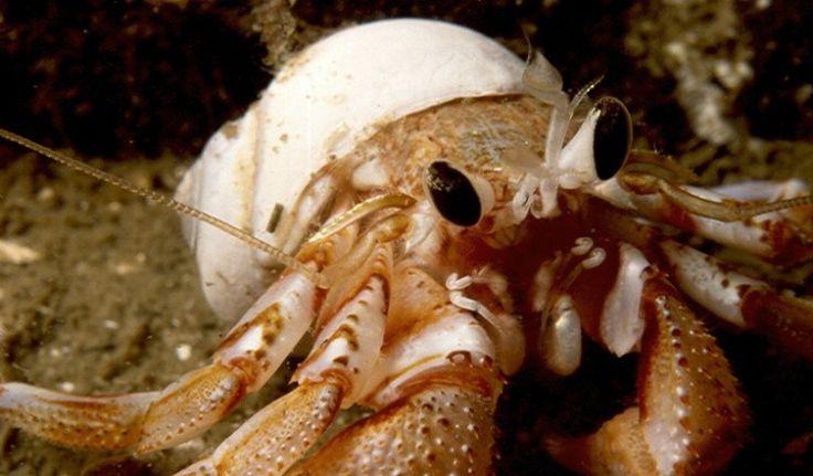 Absolutely Fish Blogs - Marine Invertebrates for Sale: The ...  |Phylum Arthropoda Marine