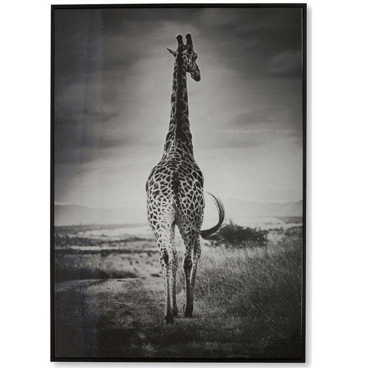 Giraffe Roaming Afica Black & White Wall Art $145.90
