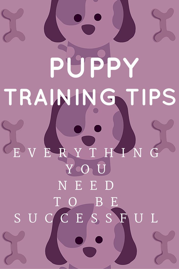 Over 100 actionable and easy tips for training your puppy. Gathered from top dog trainers.