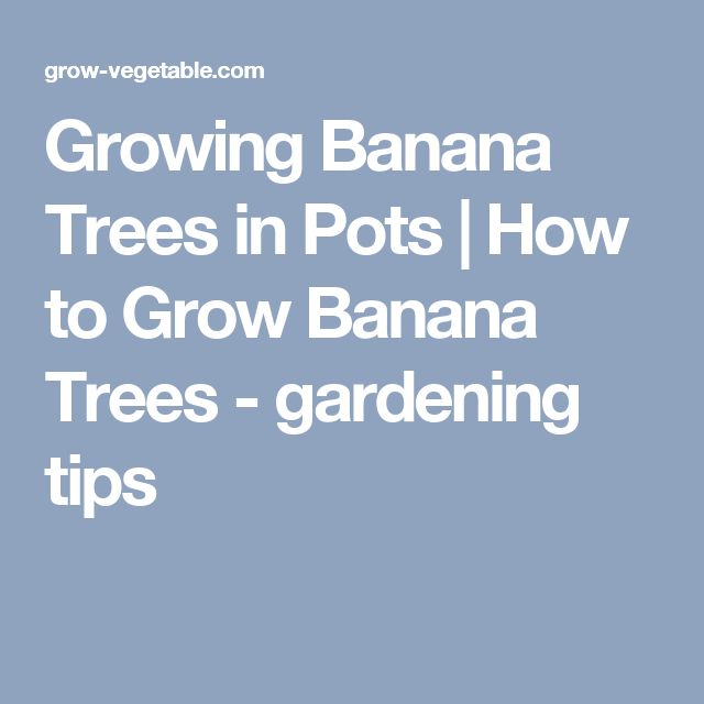 Growing Banana Trees in Pots | How to Grow Banana Trees - gardening tips