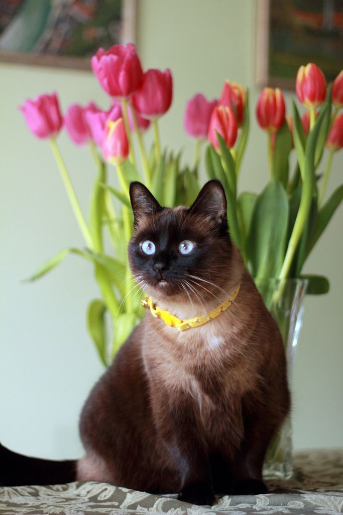 What Happens When Cats Eat Tulips