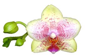 Really good orchid care tips. I buy my orchid potting mixes and fertilizer from this site.