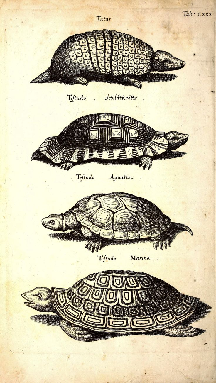 armadillo and turtles