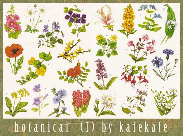 17 best images about botanical photos on pinterest limited edition prints vintage style and. Black Bedroom Furniture Sets. Home Design Ideas