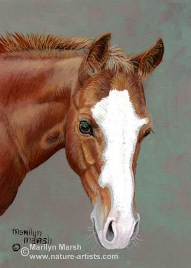 Acrylic Painting of a sorrel colt by Marilyn Marsh ...