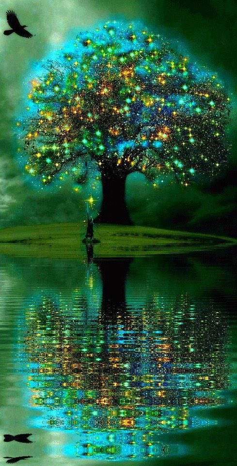 A ○•° My fairy lights have died away but I will never give up the search for my magic tree.