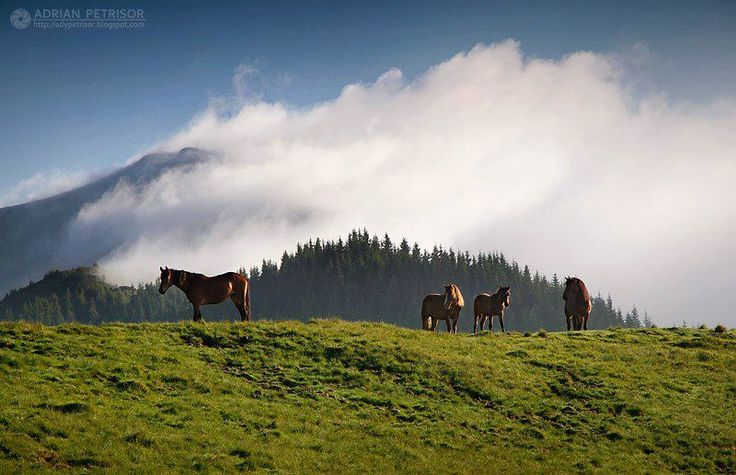 Carpatian mountains