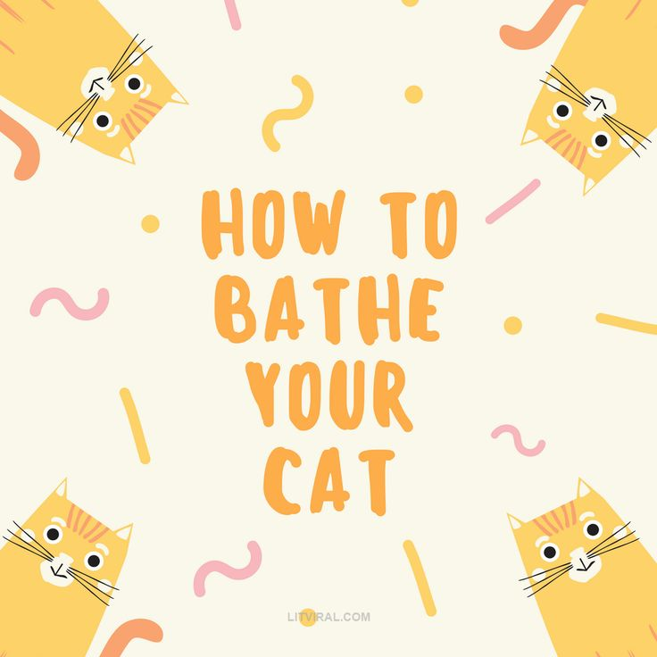 How To Bathe Your Cat | LitViral.com