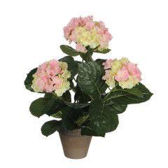Decorazione-Pianta ortensia rosa-35487011