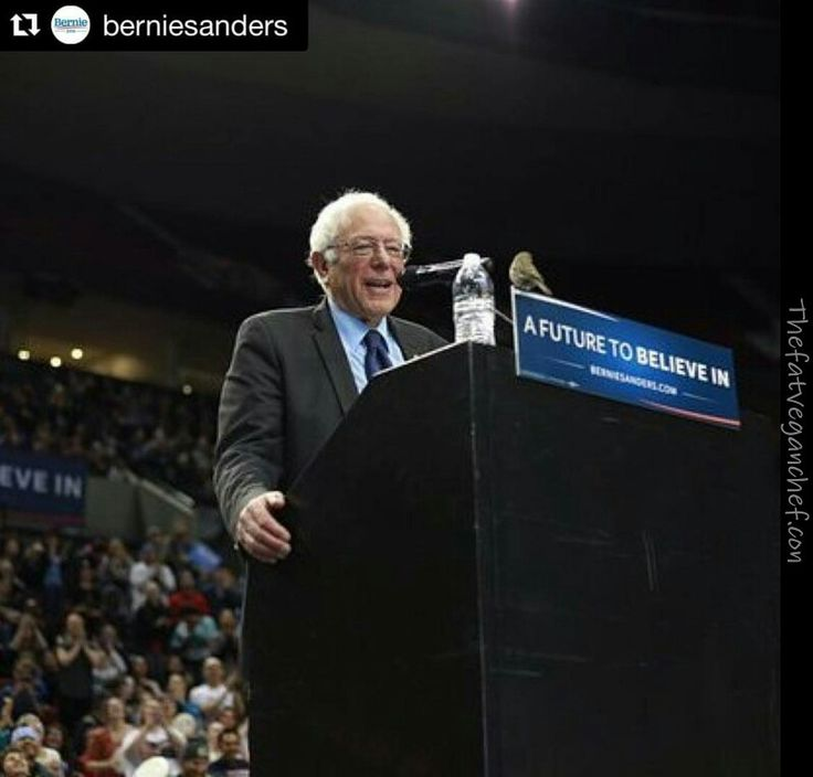 I really do love this!  Although i do think the bird was asking for water and wish Bernie should have diven it a cap full. #bernie2016 #berniesanders #feelthebern #birdsforbernie #birdiesanders #bernie #vote #votebernie #birdieparty #share #regram #reshare #vegansforbernie #vegans4bernie #bernieorbust #pinnersforbernie