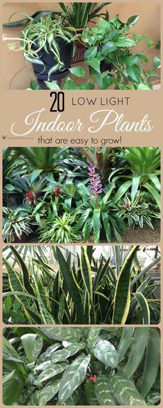 This is a great list of some of the best low light indoor plants you can grow. These houseplants are also low maintenance, and they're gorgeous too!
