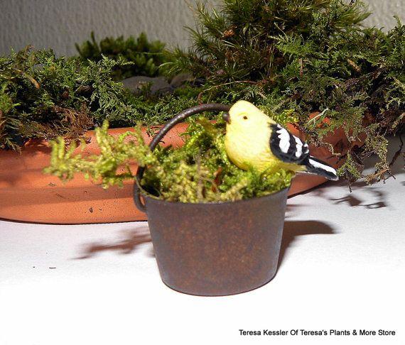 1 Fairy Garden Rusty metal moss pot with bird-Miniature garden pot with preserved or live moss-Rustic metal Flower pot.