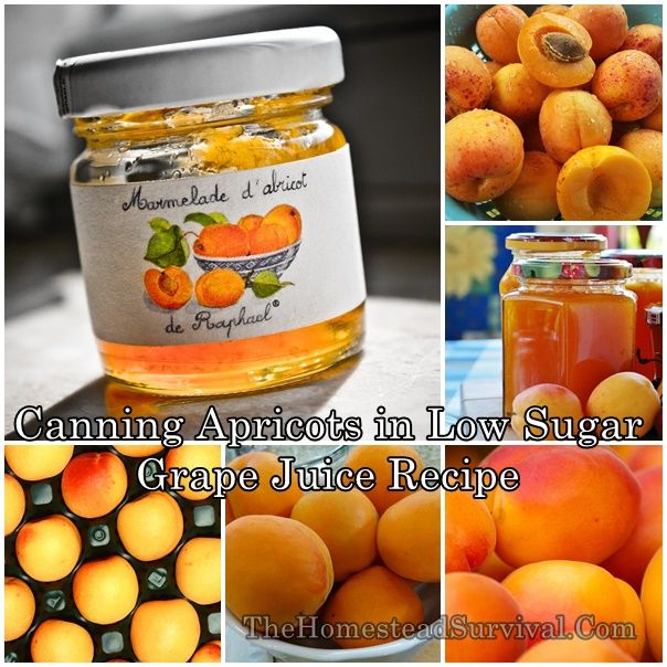 Canning Apricots in Low Sugar Grape Juice Recipe Homesteading  - The Homestead Survival .Com