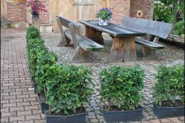 Små häckelement (upp till 60x50x18 cm)  Små häckelement mäter 60 cm på höjden (buxbom 30 cm). Dessa häckelement är särskilt lämpliga till låga häckar som ska planteras snabbt. Det har många fördelar: du får snabbt den vackra häck (t.ex. runt uteplatsen eller längs med uppfarten), du behöver. Vidare är det möjligt att plantera en häck på t.ex. balkongen eller i vinterträdgården.