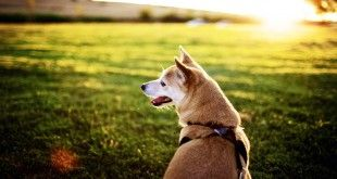 Dog health blog shares #doghealthcaretips, dog health care information, healthy dog food, pet nutrition, dog cleaning, safety tips and much more. #dogwebsiteindia #dogsindia #cutedogimages