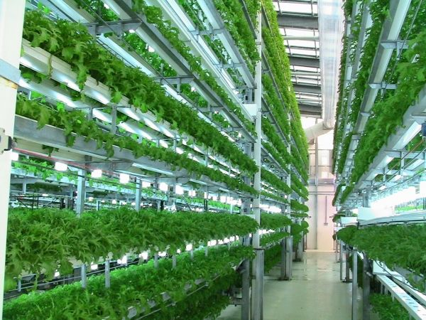 Vertical Farming the future of food production. #verticalfarming #farming