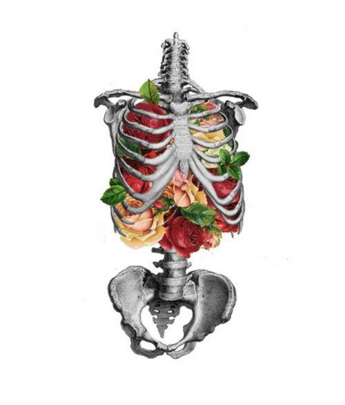 Google Image Result for http://25.media.tumblr.com/tumblr_lfj90juwoj1qzrf3oo1_500.jpg: Rose, Skull, Anatomy, Bones, Illustration, Art Prints, Skeletons, Tattoo, Flowers
