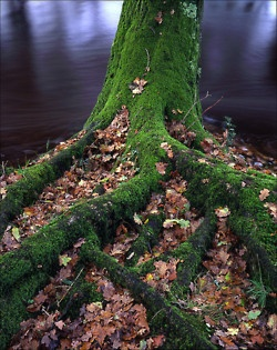 152 Best Images About Moss On Pinterest Forests Moss