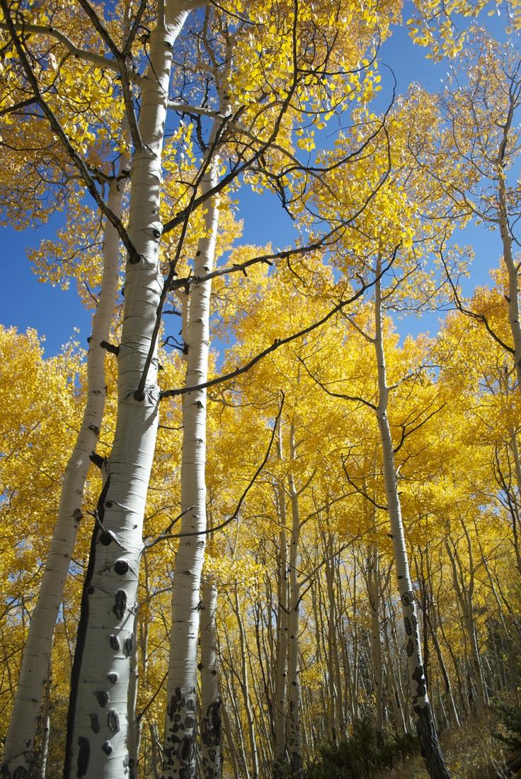 Colorado, 2012