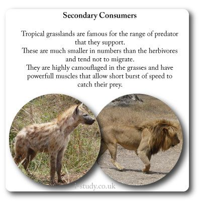 17 Best images about IB Environmental Systems and ... Grassland Secondary Consumers