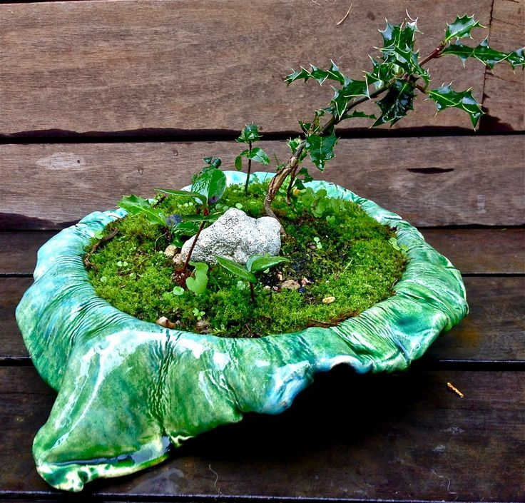 AROBE CERÁMICA, bonsai.