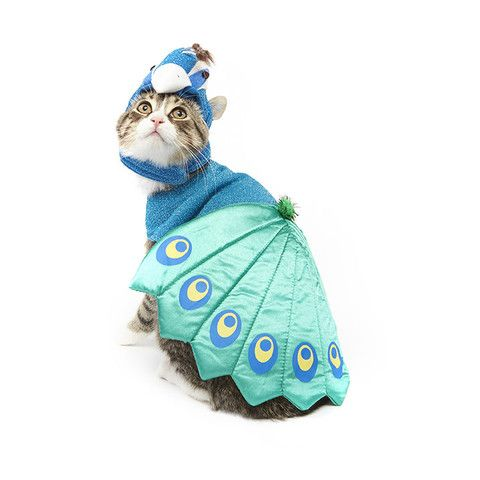 Peacock Cat Costume – Meowingtons  For the most fabulous cats ever.