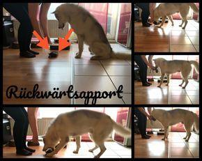 Serie Dummy Training Teil 1 -Erfolg geht durch den Magen- Futterdummy – Undercover Labrador