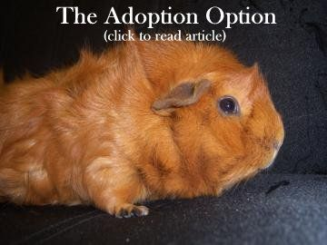 The Adoption Option: Small pets in shelters