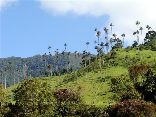 La grandiosidad del Valle del Cocora en #Salento #Quindio. #FotoDelDia EnMiColombia.com
