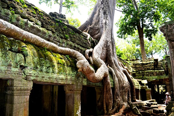 The Ta Prohm Temple was thought to be out of the temple in the roots. All people with lingering to suffocate to describe this charming temples. #Odyssey #Tour  #SiemReap #Cambodia #Temple  #Highlights #Amazing