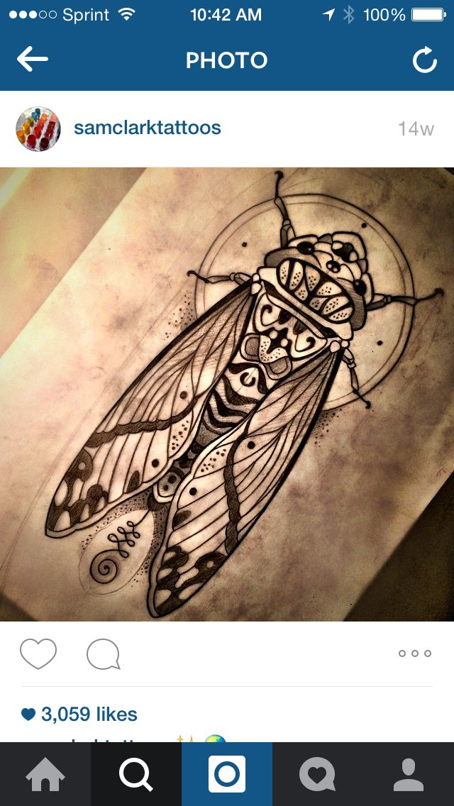 This would be such a cool cicada tattoo