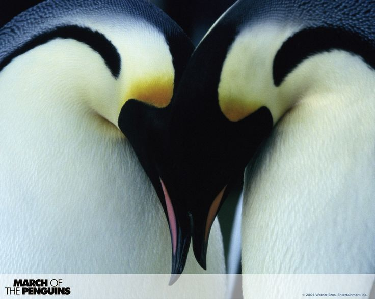 1280x1024 free desktop pictures march of the penguins