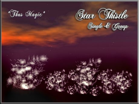 Second Life Marketplace - *Thus Magic*~ Star Thistle ~ Winter plant ~ SINGLE & GROUP - Promo Price!