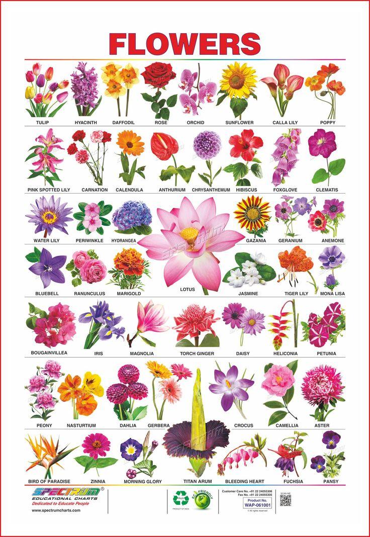 flowers, tulip, hyacinth, daffodil, rose, orchid ...