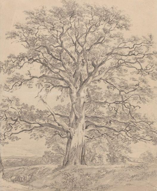 """ John Constable (Brit. 1776-1837, A Great Oak Tree, ca. 1801, Black chalk with gray wash, 21x 17 cm, National Gallery of Art, Washington """