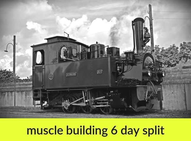 muscle building 6 day split_775_20190131074511_51 anatomy