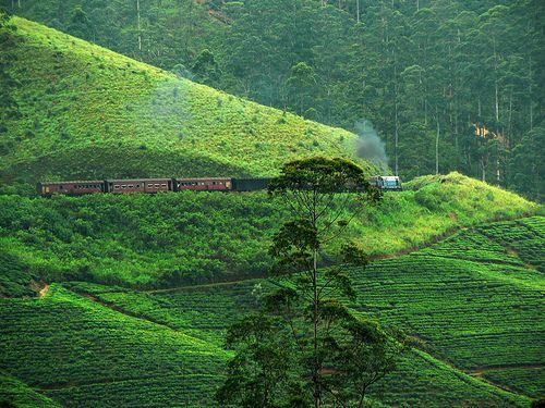 #TravelPlaces in #Asia #NuwaraEliya #SriLanka #travel #tourism