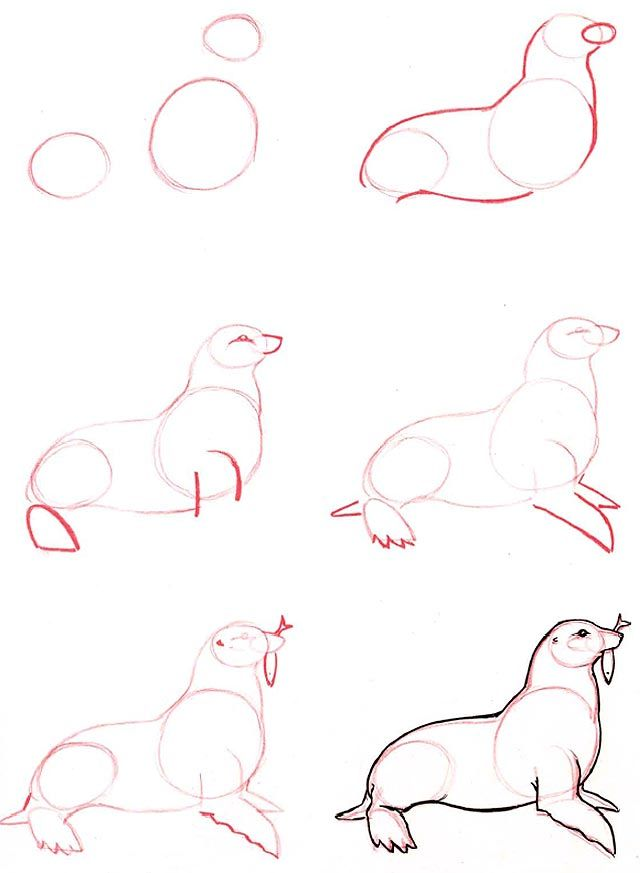 Learn to draw: Seal