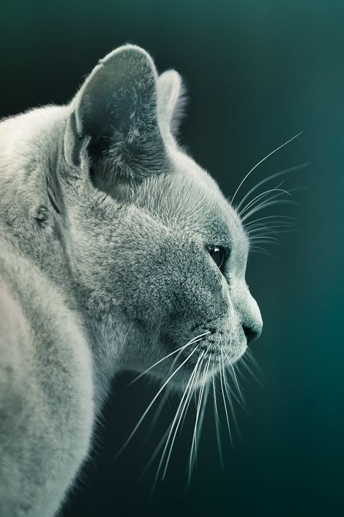 Cute kitten |Cuba Gallery| #cat #photography