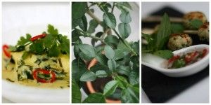 Cooking Class Wed 9th April 2014 A Taste of Thailand with The Soul Food Co.  Evening 7.30 pm to 9.30 pm.  Meet our new 'baby' - our very own kaffir lime tree!
