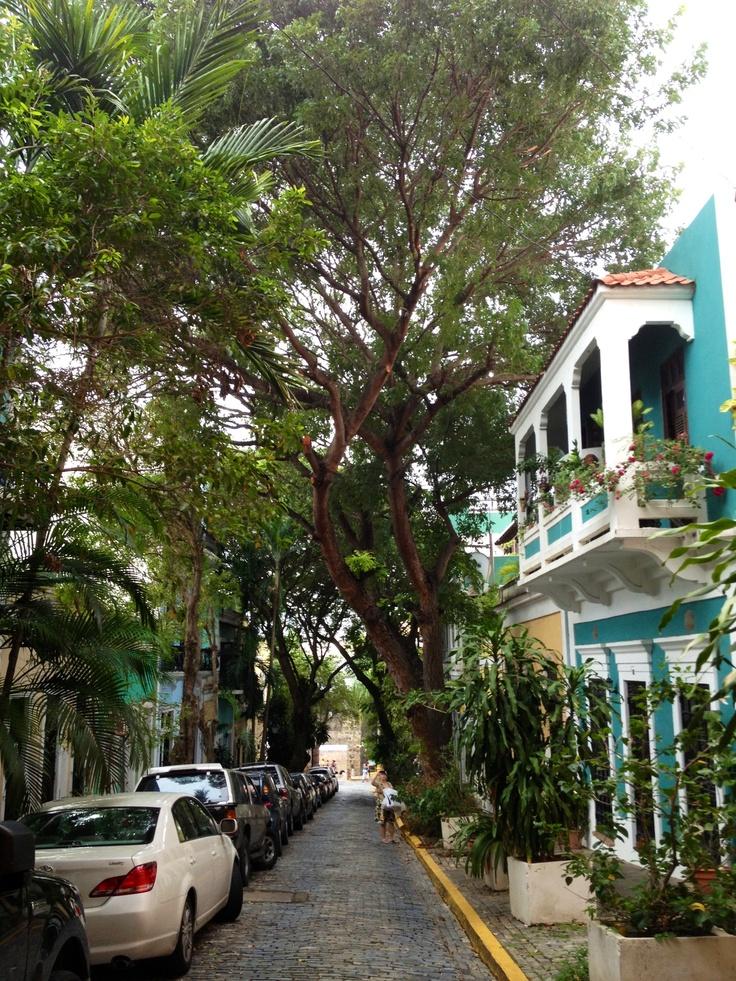 Árboles del Viejo San Juan
