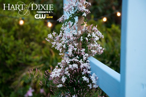 Springtime In My Town presented by The CW. Repin for a chance to win! #HartofDixie airs Tuesdays 8.7c. Visit http://www.cwtv.com/spring to enter. #PinToWin #contest #prizes #thecw