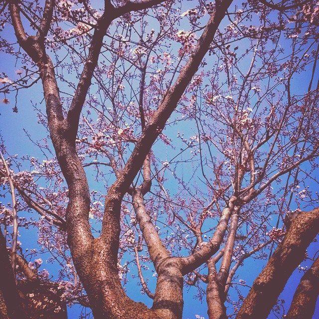 #novellaorchidea #novella #orchidea #raccontierotici #racconti #ebook #ricardo #tronconi #eroticnovel #flower #power #flowerpower #nature #instanature #pruno #trees #garden #home #beauty #spring #instaspring